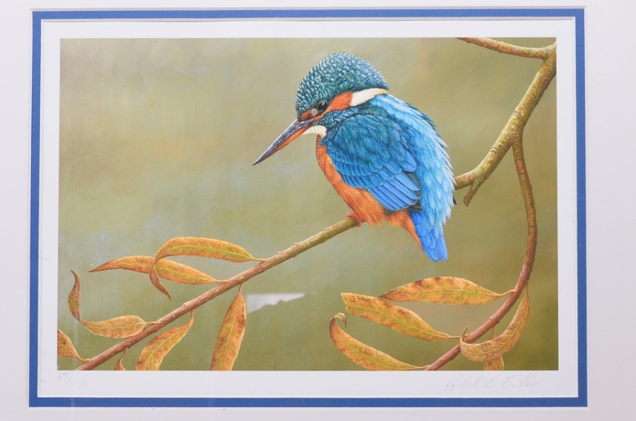 Kingfisher on Willow - Limited Edition Framed Print by Robert E Fuller 2